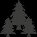Iglasto drevo